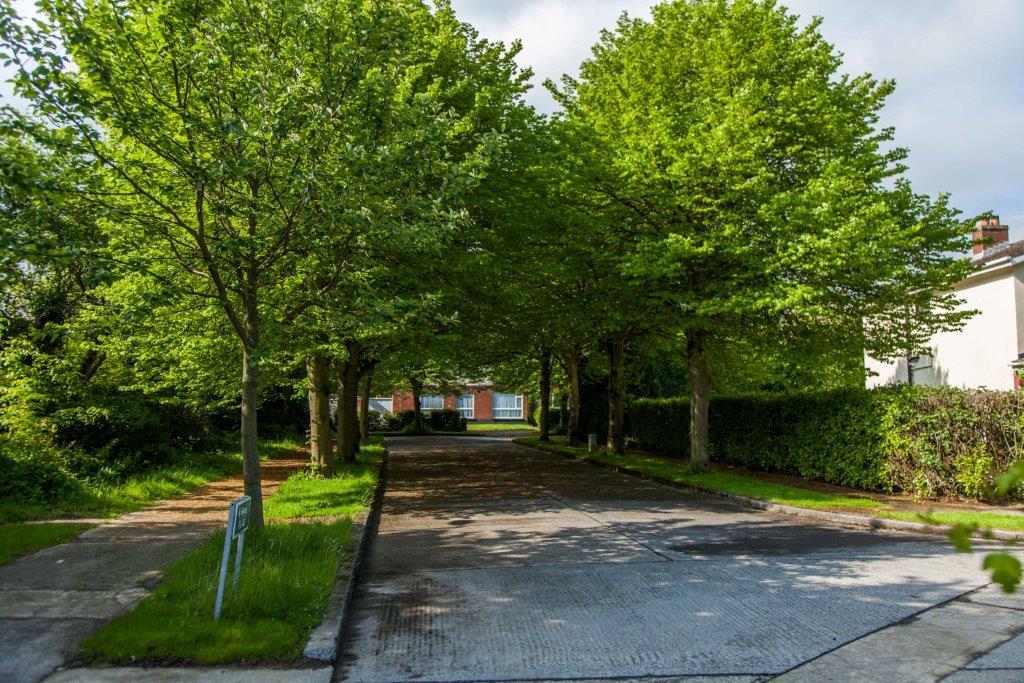 Footpath and Road Repairs Update June