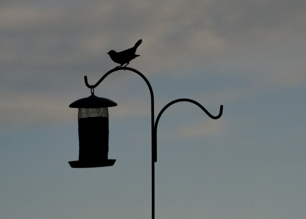 Make Your Own Bird Feeder 10am, 17th Jan 2016, Marlay Park